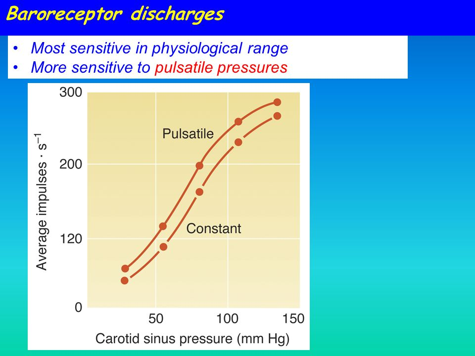 Baroreceptor discharges Most sensitive in physiological range More sensitive to pulsatile pressures