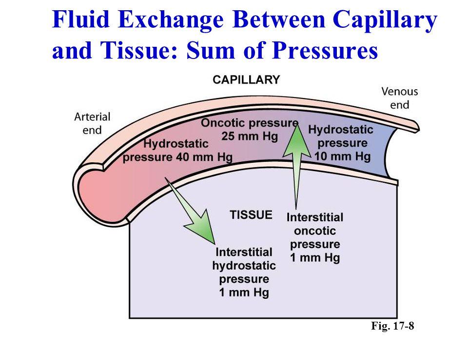 Fluid Exchange Between Capillary and Tissue: Sum of Pressures Fig. 17-8