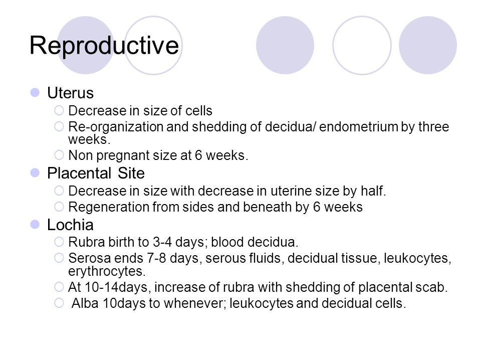 Reproductive Uterus Placental Site Lochia Breasts Cervix Vagina
