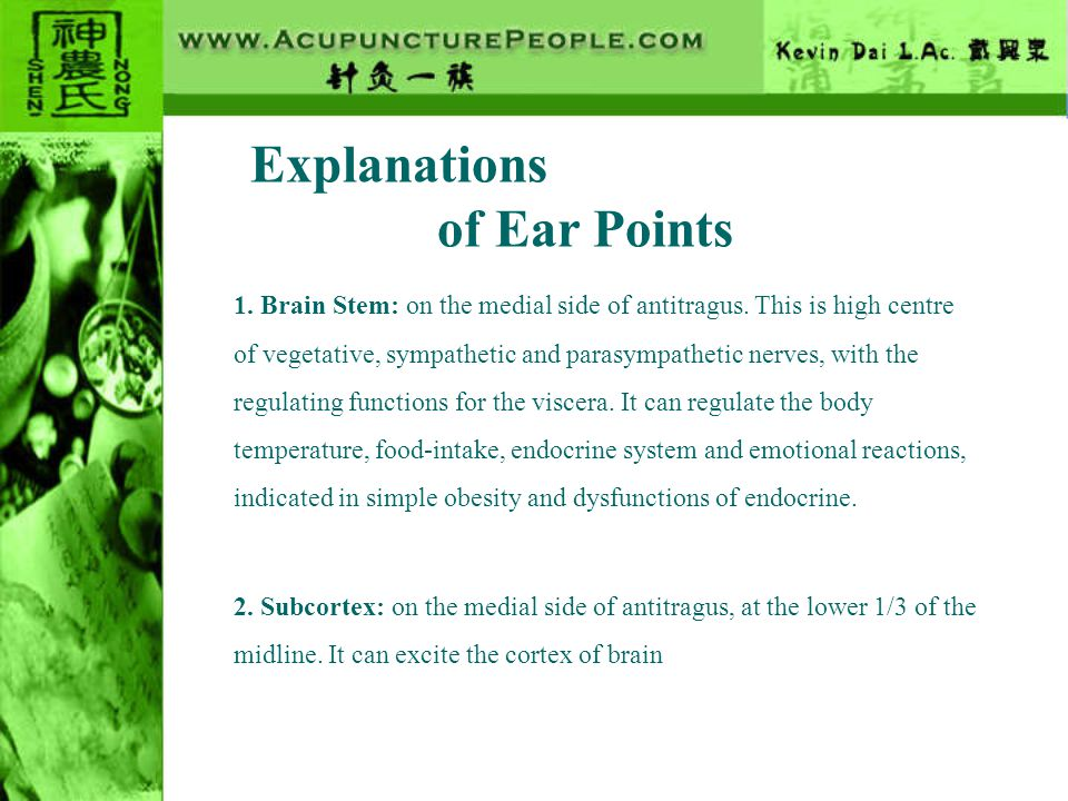 Explanations of Ear Points 3.Endocrine: at the base of cavum conchae in the intertragic notch.