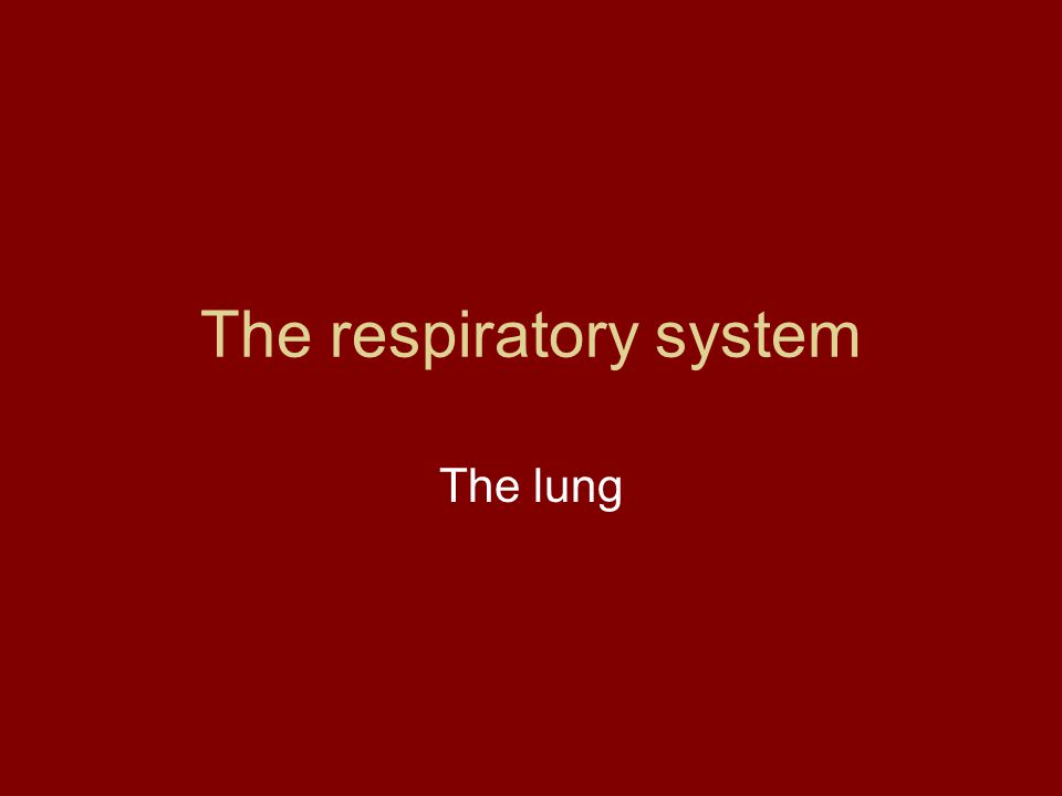 The respiratory system The lung