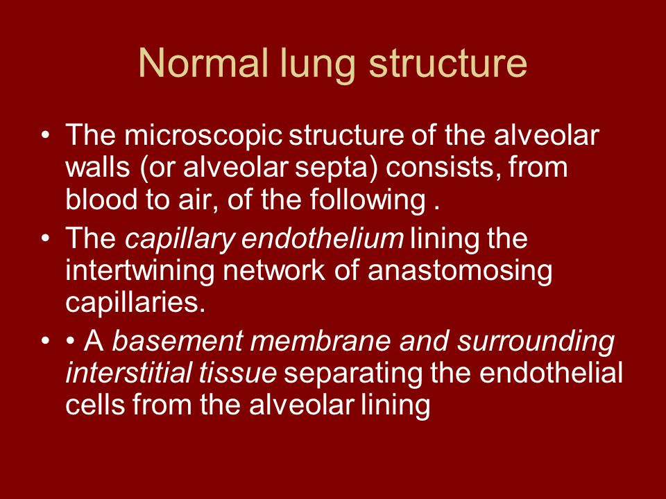 Normal lung structure The microscopic structure of the alveolar walls (or alveolar septa) consists, from blood to air, of the following. The capillary