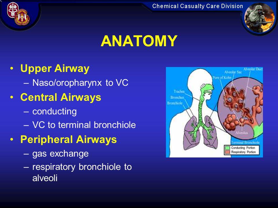 ANATOMY Upper Airway –Naso/oropharynx to VC Central Airways –conducting –VC to terminal bronchiole Peripheral Airways –gas exchange –respiratory bronchiole to alveoli