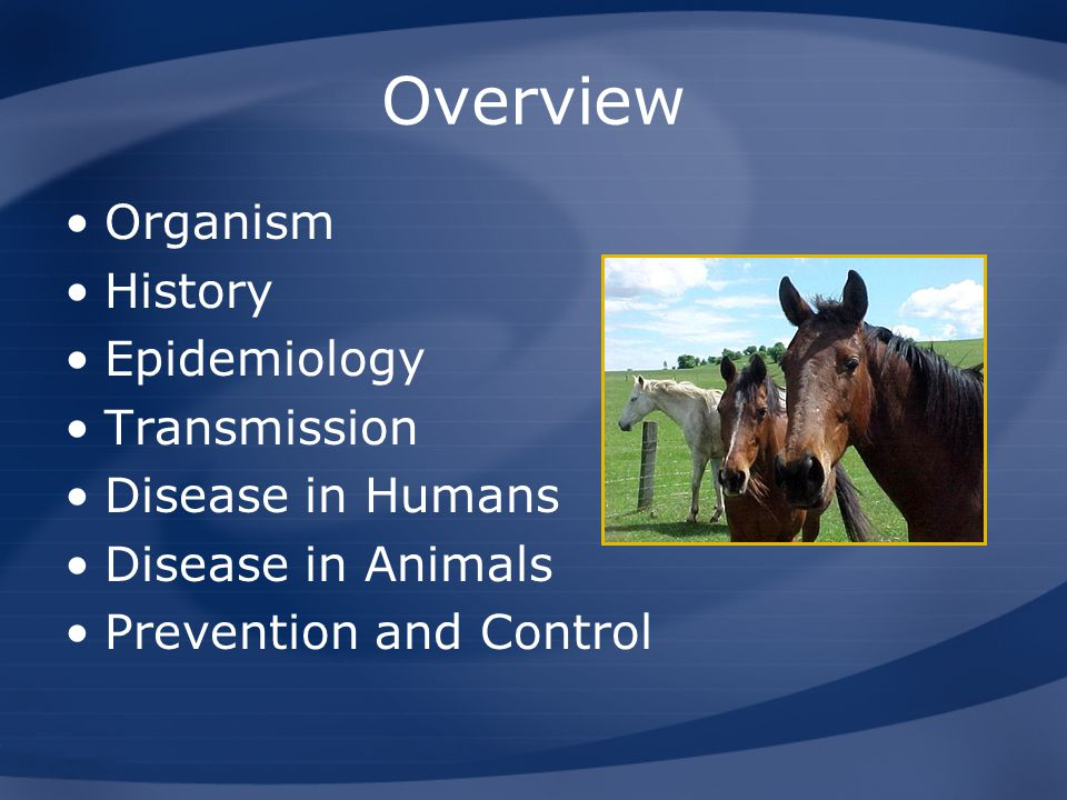 Overview Organism History Epidemiology Transmission Disease in Humans Disease in Animals Prevention and Control