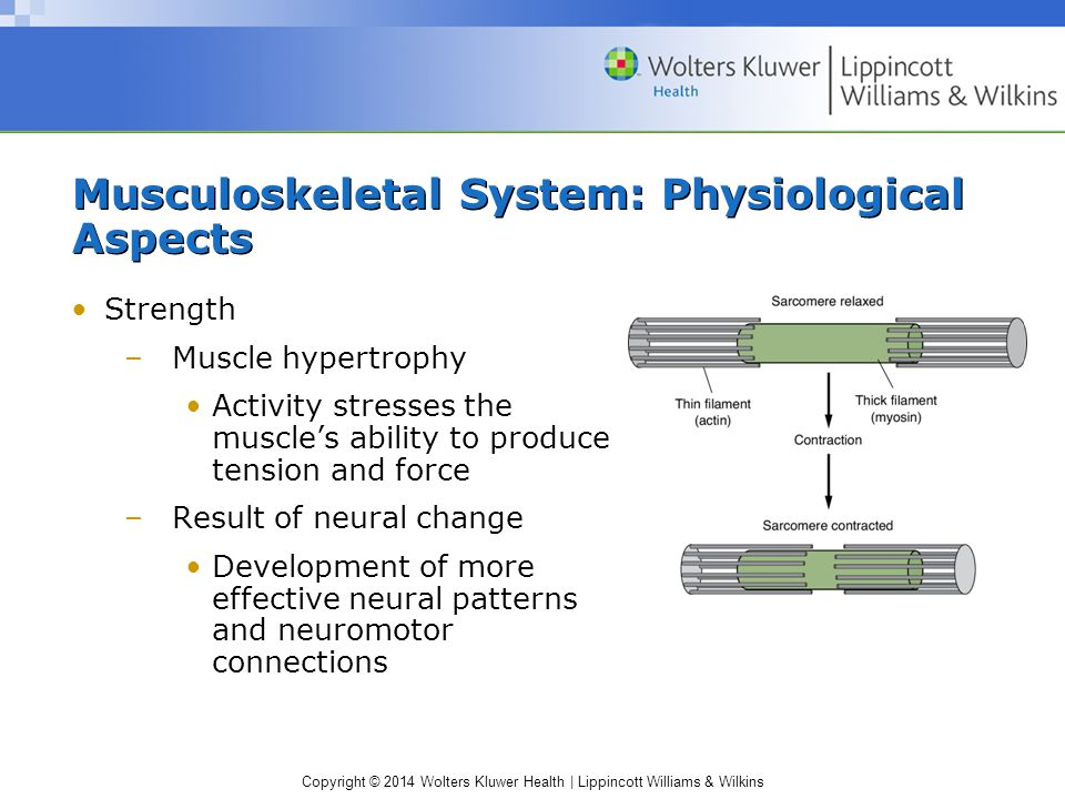 Copyright © 2014 Wolters Kluwer Health | Lippincott Williams & Wilkins Musculoskeletal System: Physiological Aspects Strength –Muscle hypertrophy Acti