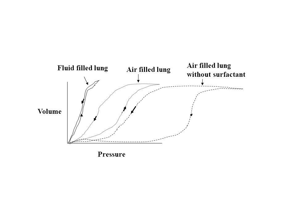 How does obesity impact: 1)Pulmonary mechanics Lung volumes Airway caliber Airway responsiveness 2)Pattern of breathing 3)Blood gases 4)Pulmonary disease