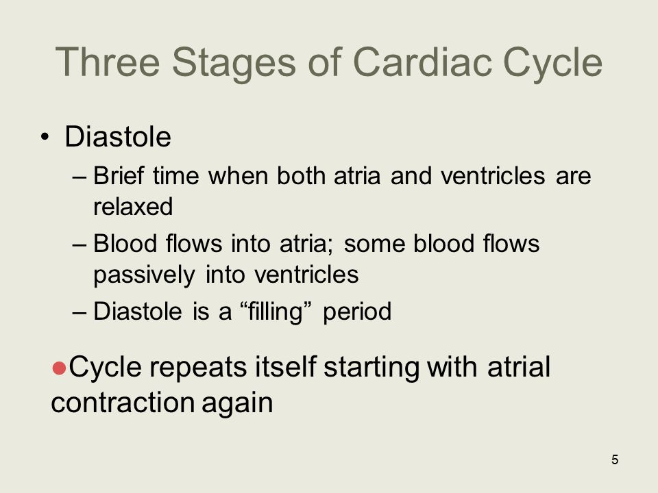 Three Stages of Cardiac Cycle Diastole –Brief time when both atria and ventricles are relaxed –Blood flows into atria; some blood flows passively into