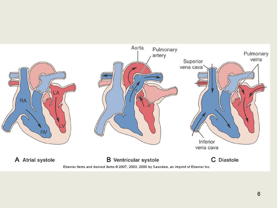 Position of valves during systole & diastole 7