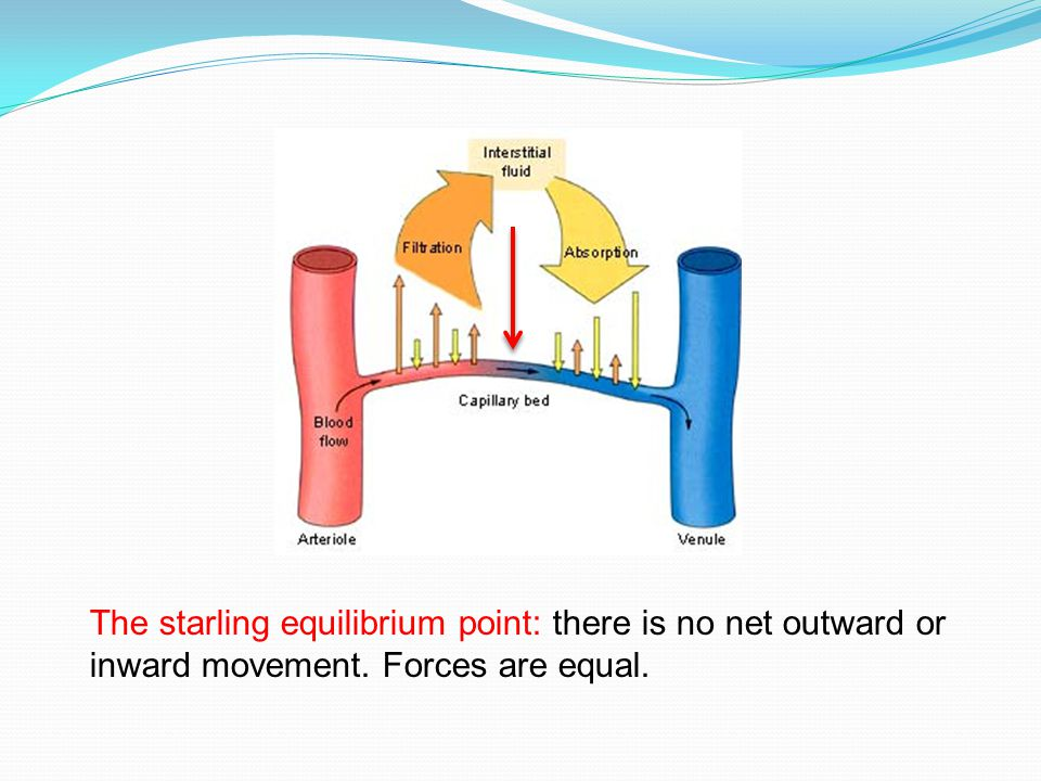 The starling equilibrium point: there is no net outward or inward movement. Forces are equal.