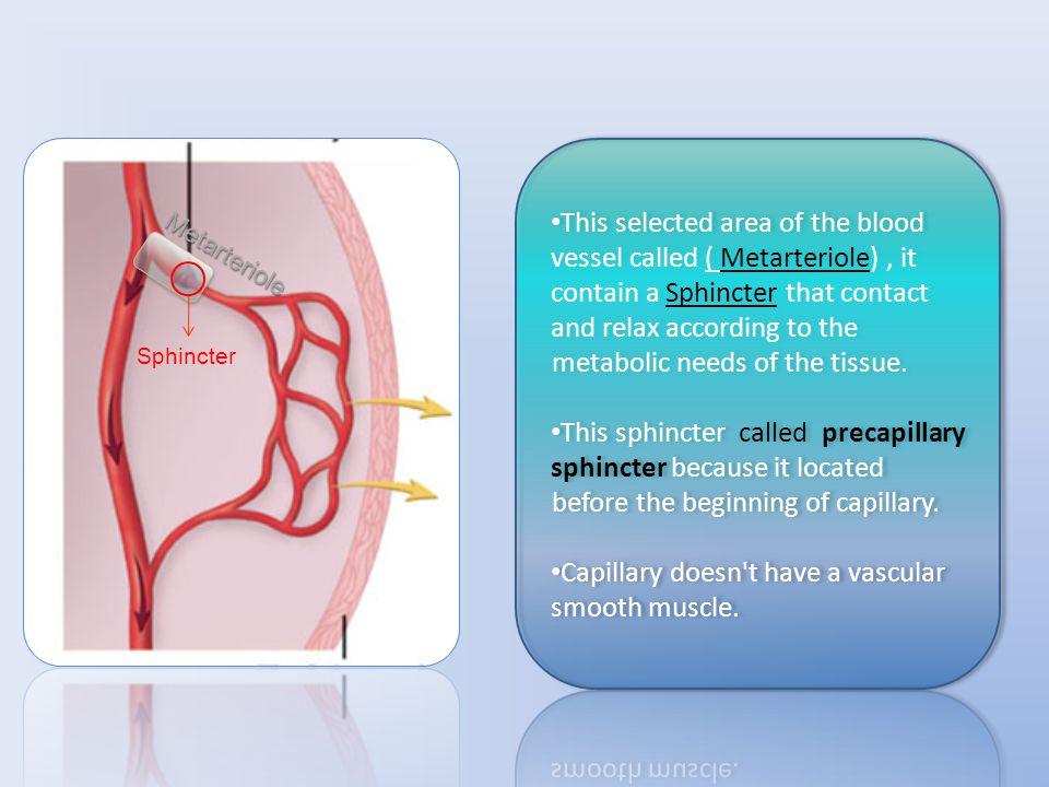 Metarteriole Sphincter