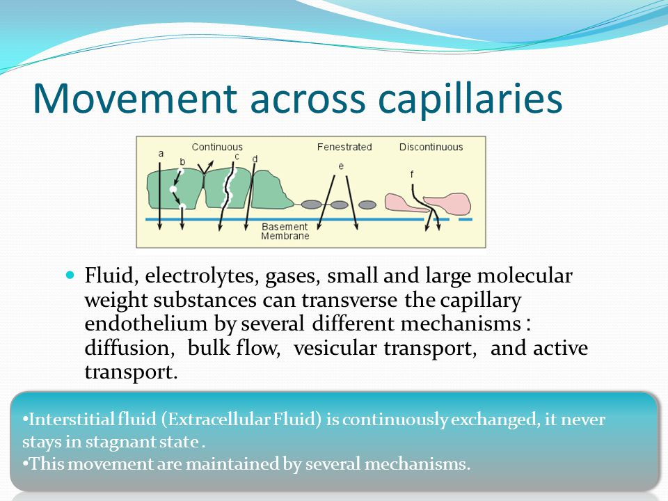 Capillary exchange of gases and nutrients