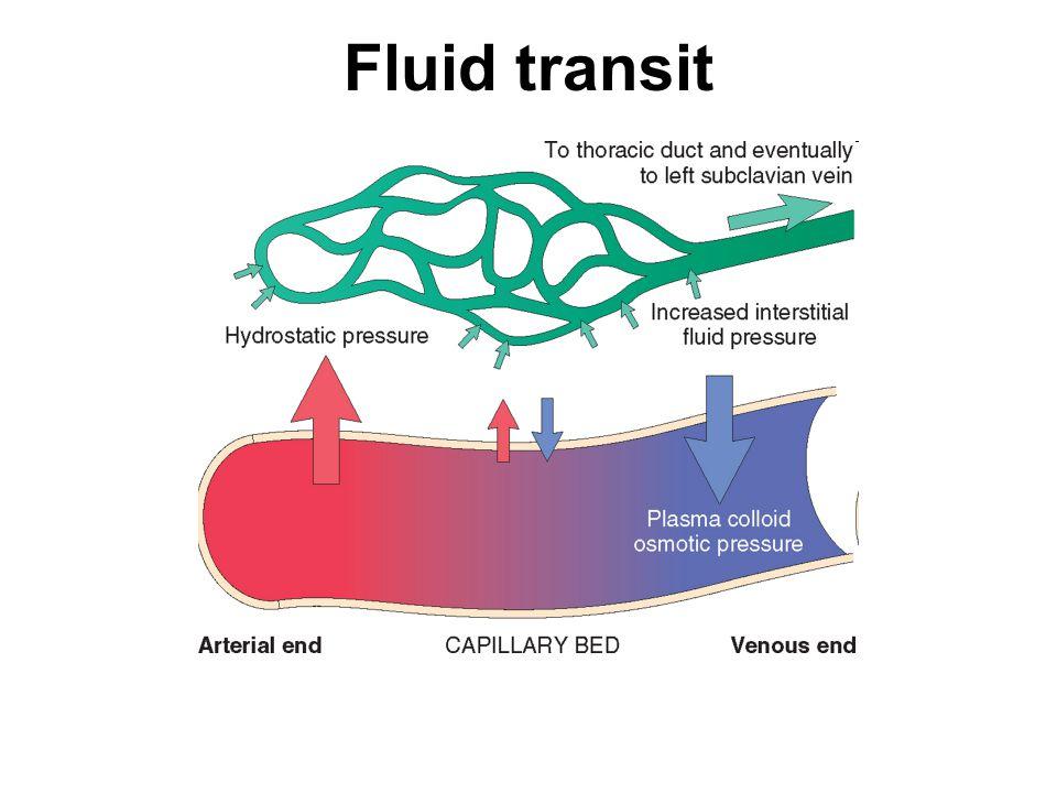Fluid transit
