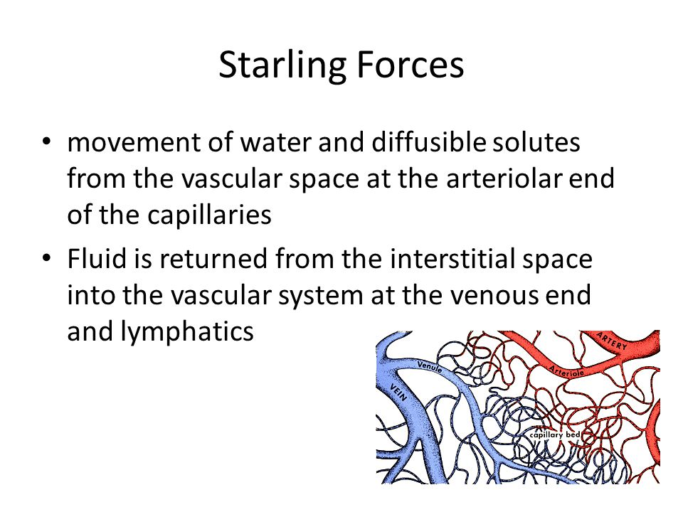 Starling Forces movement of water and diffusible solutes from the vascular space at the arteriolar end of the capillaries Fluid is returned from the interstitial space into the vascular system at the venous end and lymphatics