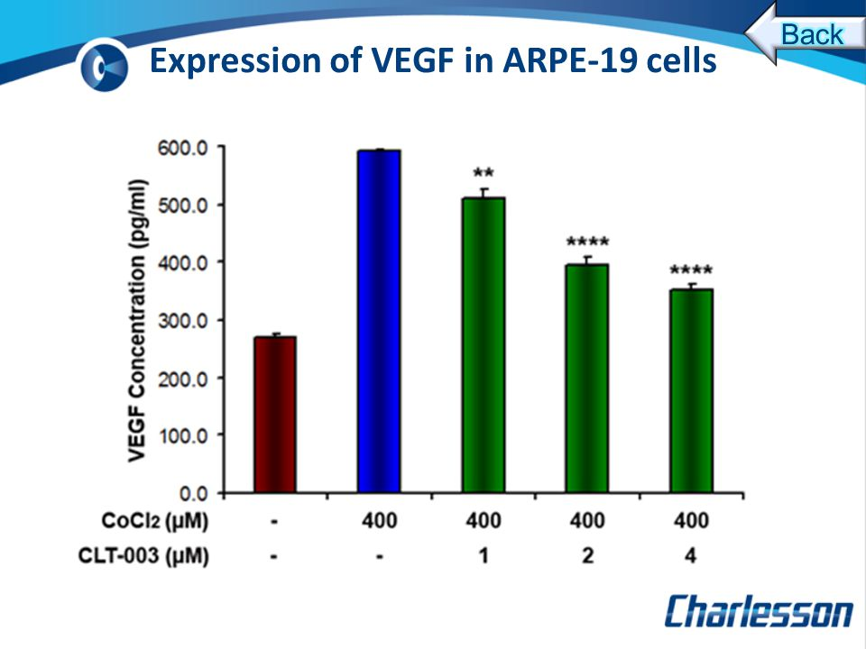 Expression of VEGF in ARPE-19 cells