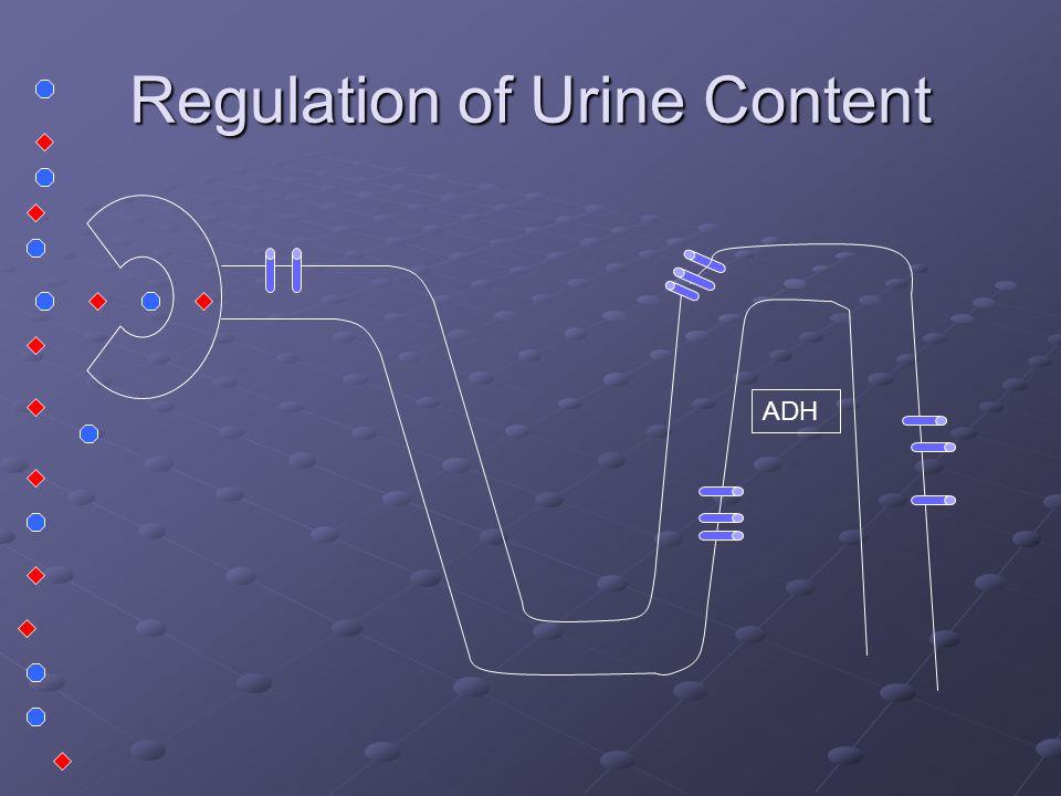 Regulation of Urine Content ADH