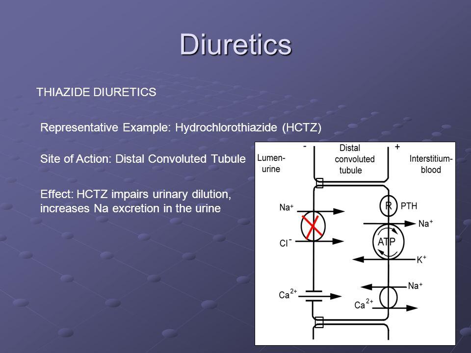 Diuretics THIAZIDE DIURETICS Representative Example: Hydrochlorothiazide (HCTZ) Site of Action: Distal Convoluted Tubule Factoid: In April of 2005, Hy