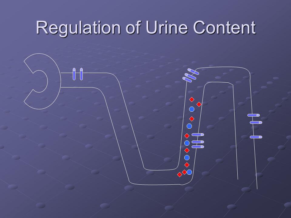 Regulation of Urine Content