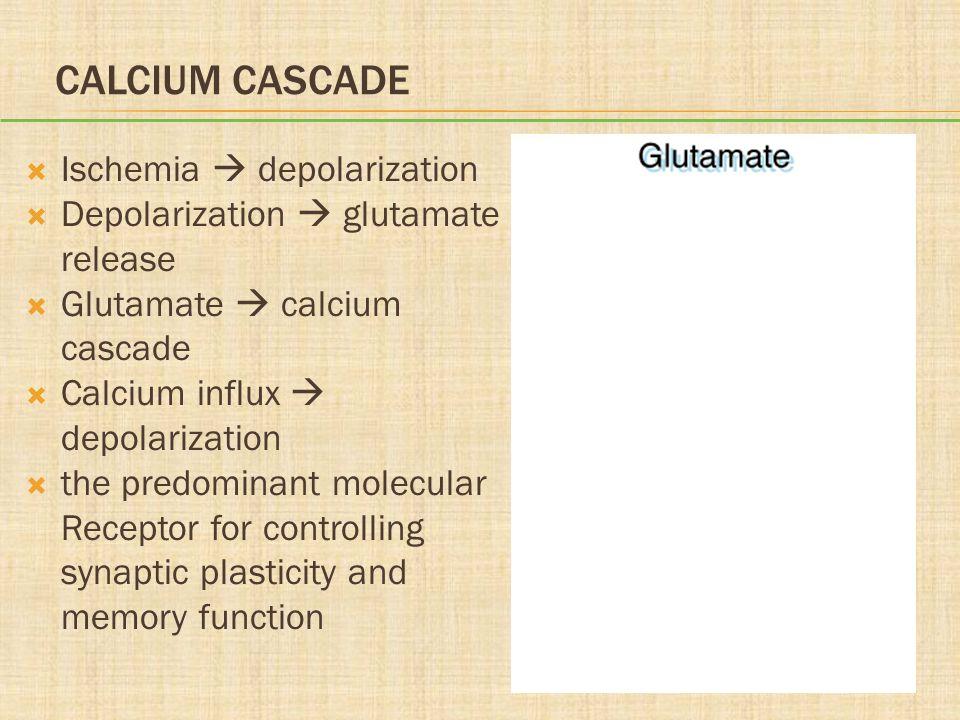 CALCIUM CASCADE  Ischemia  depolarization  Depolarization  glutamate release  Glutamate  calcium cascade  Calcium influx  depolarization  the predominant molecular Receptor for controlling synaptic plasticity and memory function