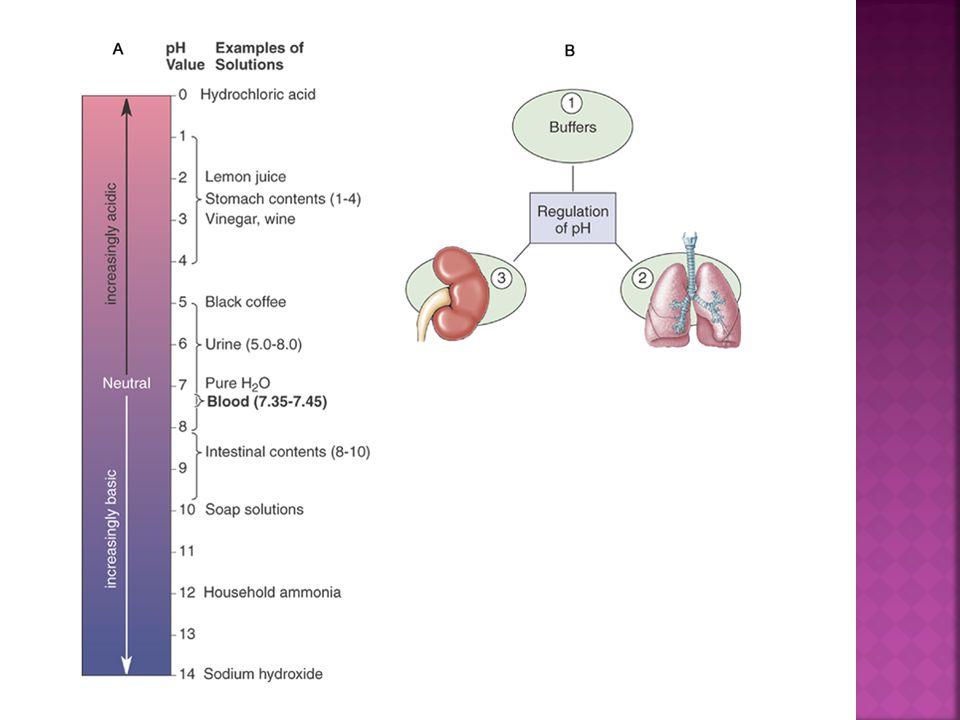 Three mechanisms help regulate pH:  Buffers  Respirations  Kidney function
