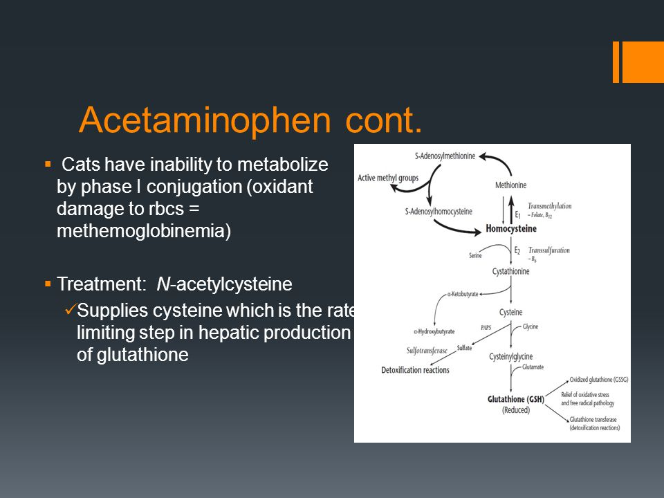 Acetaminophen cont.  Cats have inability to metabolize by phase I conjugation (oxidant damage to rbcs = methemoglobinemia)  Treatment: N-acetylcyste