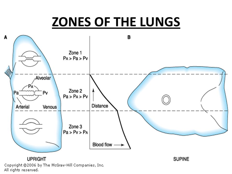 ZONES OF THE LUNGS