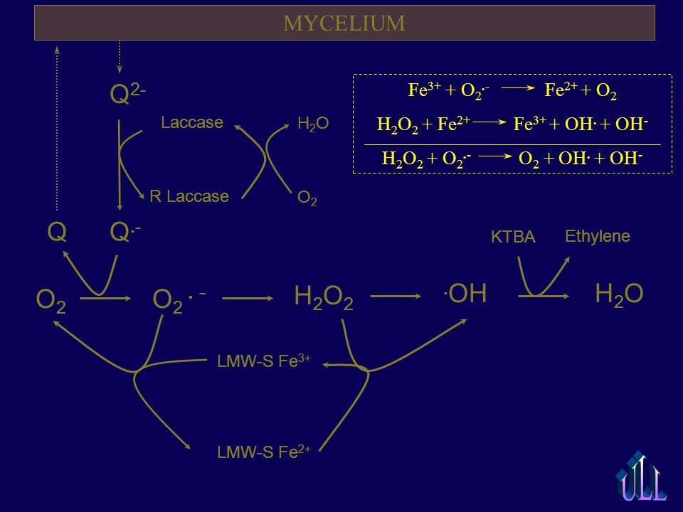H 2 O. OH H 2 O 2 O 2 O 2. - KTBA Ethylene H2OH2O O2O2 LMW-S Fe 3+ LMW-S Fe 2+ MYCELIUM Q.-Q.- Q 2- Laccase R Laccase Q Fe 3+ + O 2.- Fe 2+ + O 2 H 2