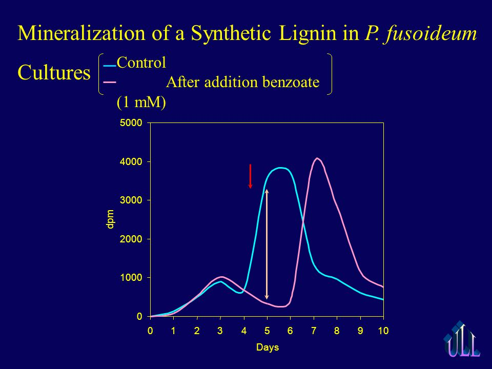 Mineralization of a Synthetic Lignin in P.