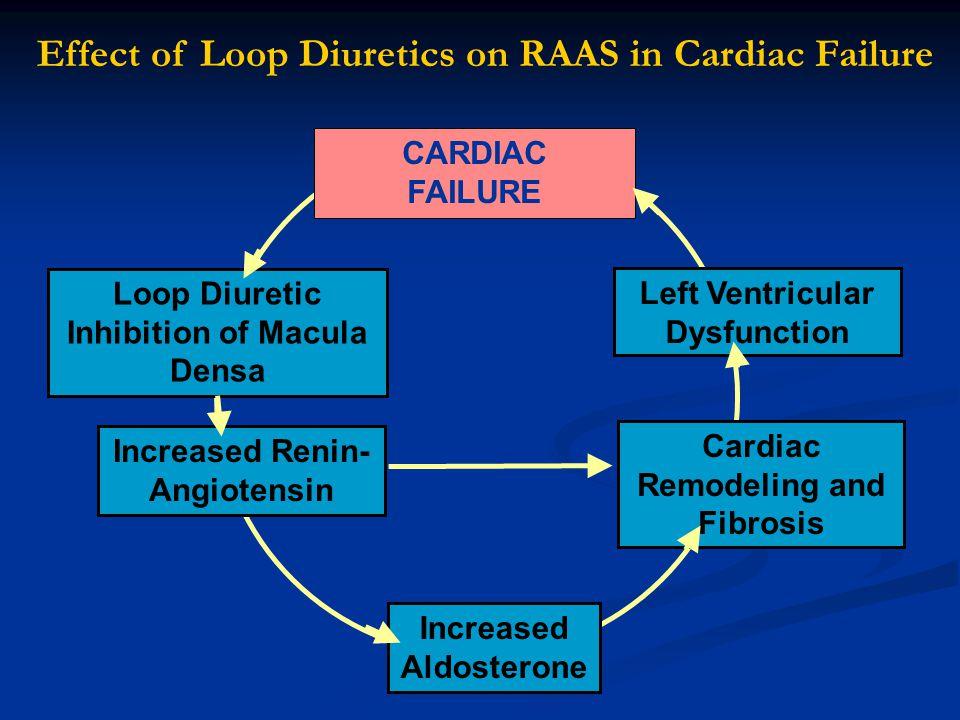 Loop Diuretic Inhibition of Macula Densa Increased Renin- Angiotensin Increased Aldosterone Cardiac Remodeling and Fibrosis Left Ventricular Dysfuncti