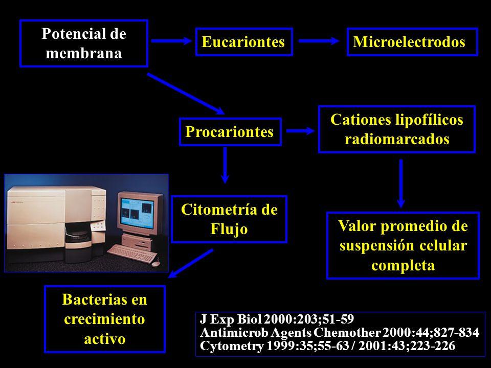 Potencial de membrana EucariontesMicroelectrodos Procariontes Cationes lipofílicos radiomarcados Citometría de Flujo Valor promedio de suspensión celular completa Bacterias en crecimiento activo J Exp Biol 2000:203;51-59 Antimicrob Agents Chemother 2000:44;827-834 Cytometry 1999:35;55-63 / 2001:43;223-226