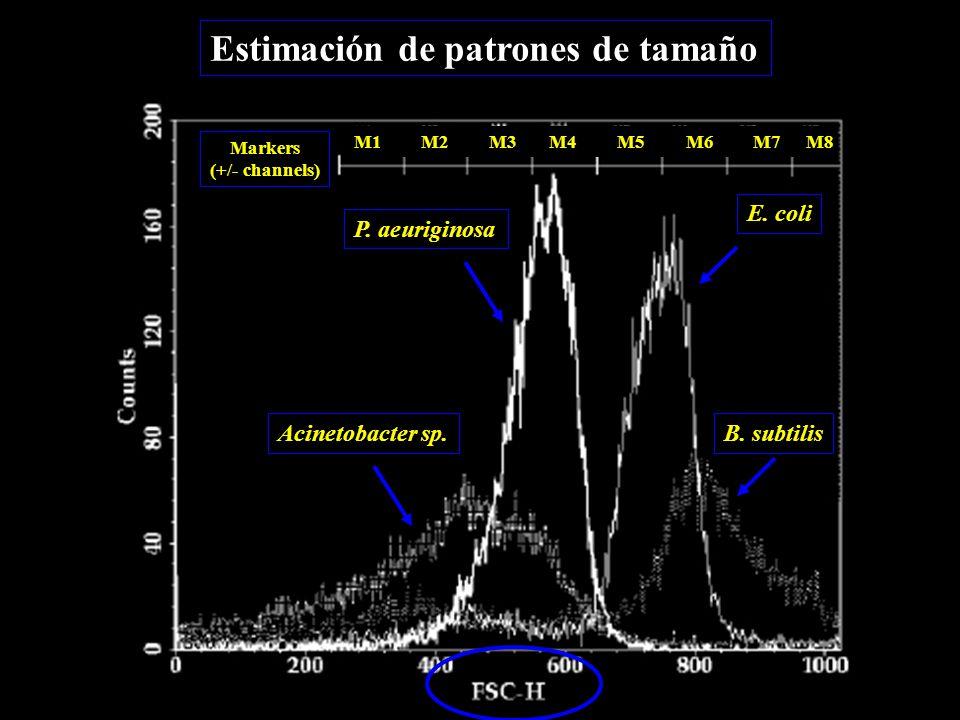 Estimación de patrones de tamaño M1M2M3M4M5M6M7M8 P.