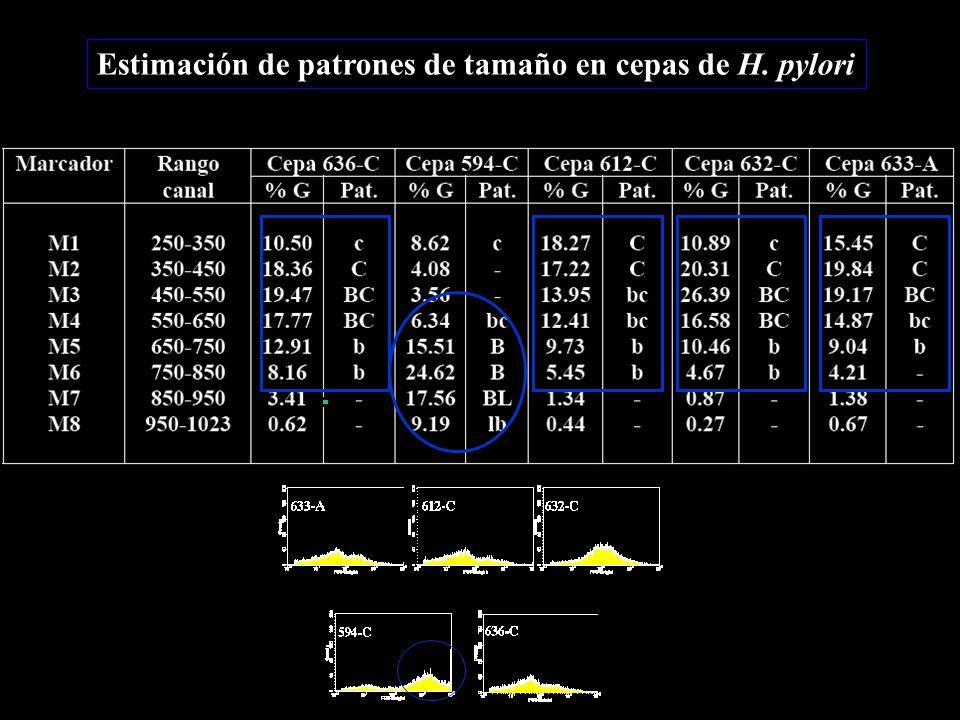Estimación de patrones de tamaño en cepas de H. pylori