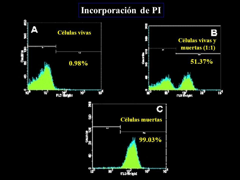 Incorporación de PI Células vivas Células muertas Células vivas y muertas (1:1) 0.98% 51.37% 99.03%