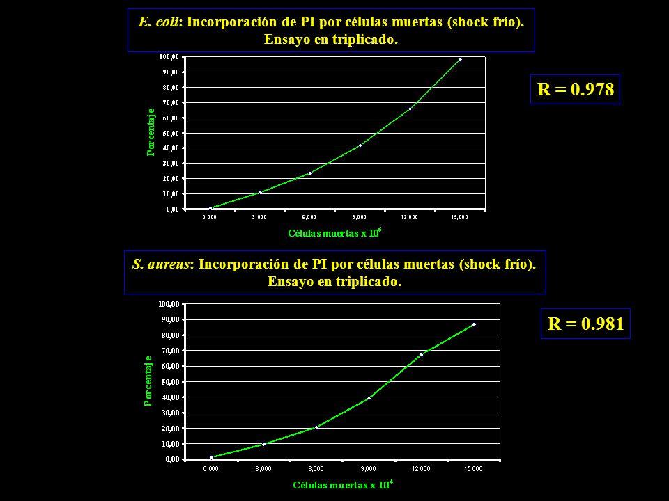 R = 0.978 R = 0.981 S. aureus: Incorporación de PI por células muertas (shock frío).