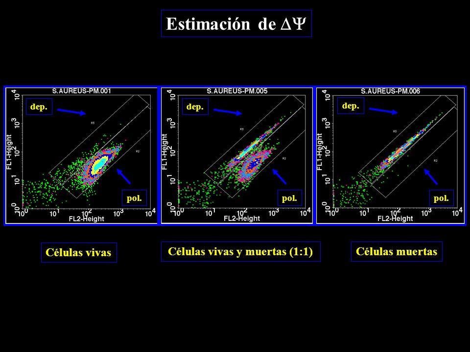 Estimación de  dep. pol. dep. Células vivas Células vivas y muertas (1:1)Células muertas