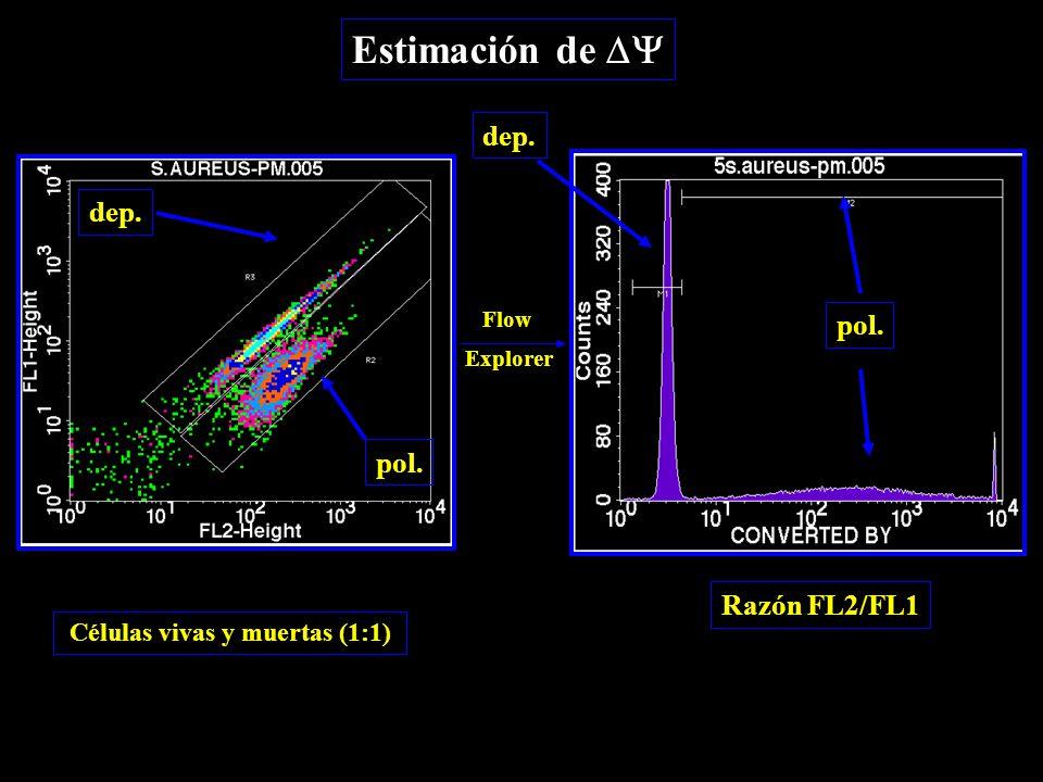 dep. pol. Razón FL2/FL1 Estimación de  Células vivas y muertas (1:1) Flow Explorer