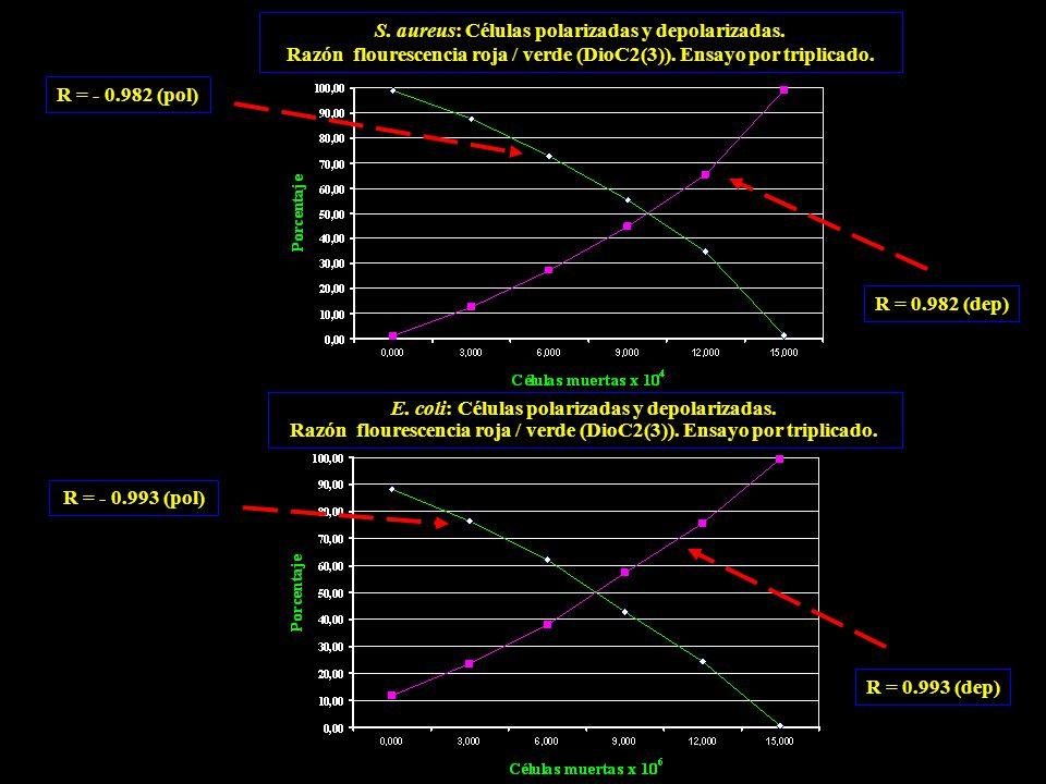 S. aureus: Células polarizadas y depolarizadas. Razón flourescencia roja / verde (DioC2(3)).