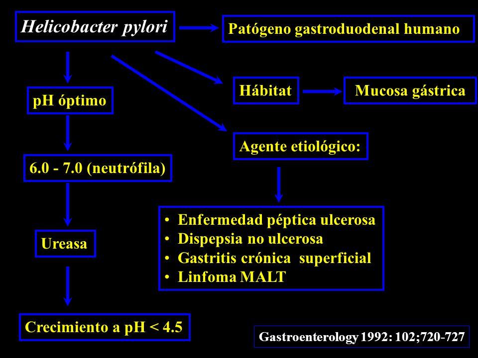 Helicobacter pylori Patógeno gastroduodenal humano HábitatMucosa gástrica Agente etiológico: Enfermedad péptica ulcerosa Dispepsia no ulcerosa Gastritis crónica superficial Linfoma MALT Gastroenterology 1992: 102;720-727 pH óptimo 6.0 - 7.0 (neutrófila) Ureasa Crecimiento a pH < 4.5