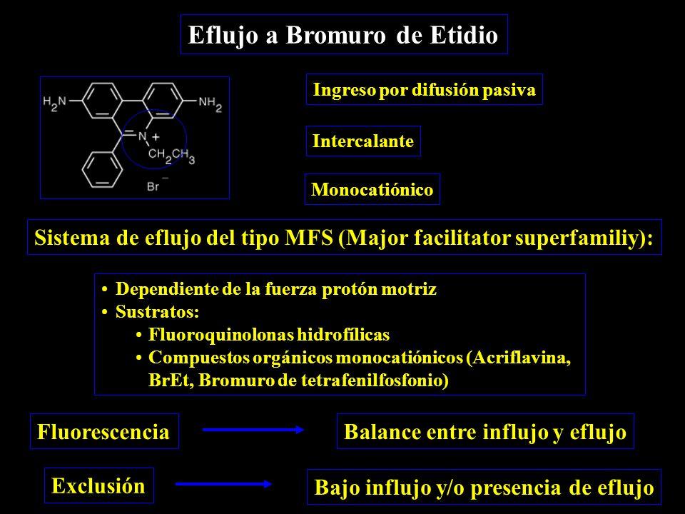 Eflujo a Bromuro de Etidio Sistema de eflujo del tipo MFS (Major facilitator superfamiliy): Dependiente de la fuerza protón motriz Sustratos: Fluoroquinolonas hidrofílicas Compuestos orgánicos monocatiónicos (Acriflavina, BrEt, Bromuro de tetrafenilfosfonio) Ingreso por difusión pasiva Intercalante Monocatiónico Fluorescencia Exclusión Balance entre influjo y eflujo Bajo influjo y/o presencia de eflujo
