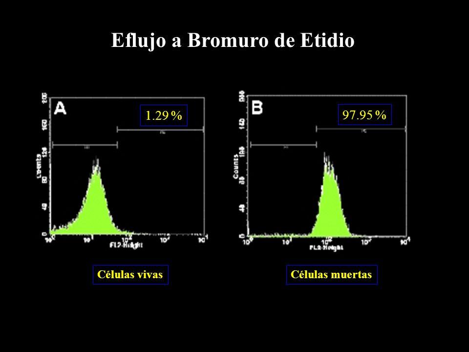 1.29 % 97.95 % Células vivasCélulas muertas Eflujo a Bromuro de Etidio