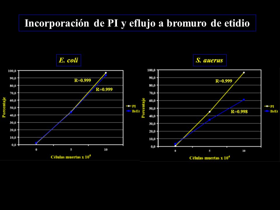 Incorporación de PI y eflujo a bromuro de etidio R=0.999 R=0.998 E. coliS. auerus