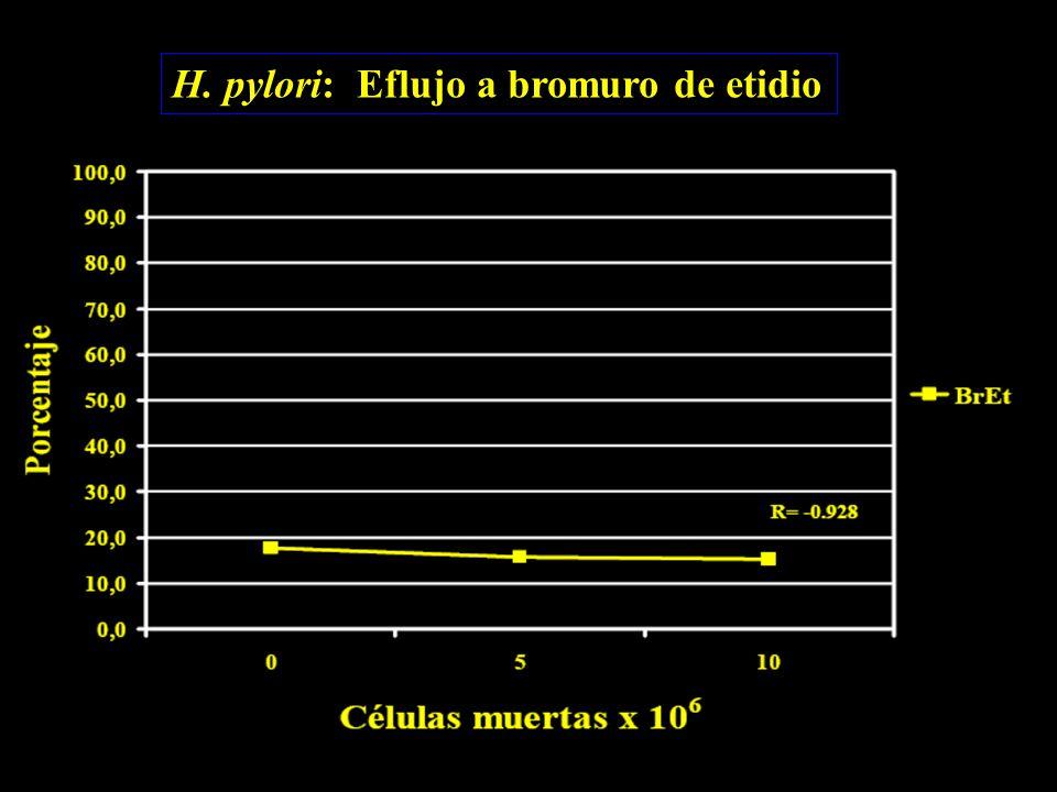 H. pylori: Eflujo a bromuro de etidio