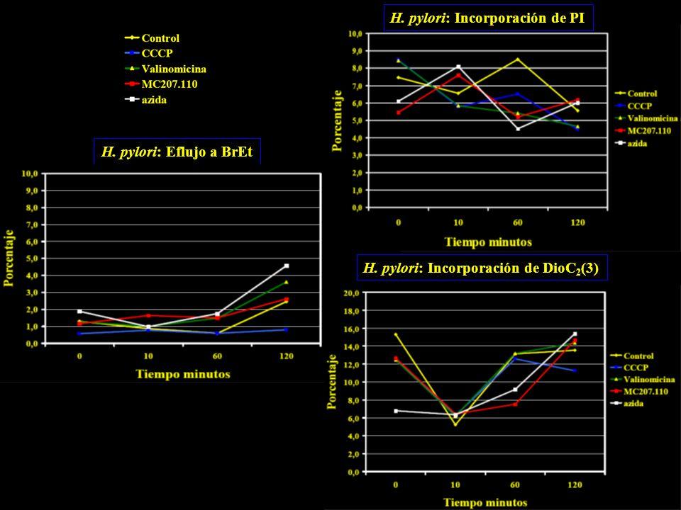H. pylori: Eflujo a BrEt H. pylori: Incorporación de PI H. pylori: Incorporación de DioC 2 (3)