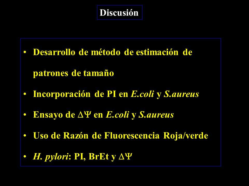 Discusión Desarrollo de método de estimación de patrones de tamaño Incorporación de PI en E.coli y S.aureus Ensayo de  en E.coli y S.aureus Uso de Razón de Fluorescencia Roja/verde H.