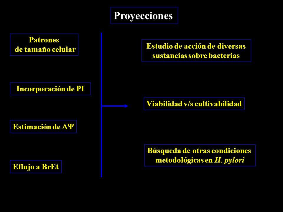 Proyecciones Patrones de tamaño celular Incorporación de PI Estimación de  Eflujo a BrEt Estudio de acción de diversas sustancias sobre bacterias Viabilidad v/s cultivabilidad Búsqueda de otras condiciones metodológicas en H.
