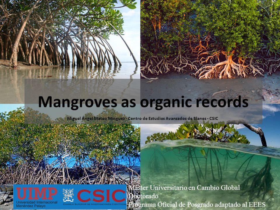 Mangroves as organic records Miguel Ángel Mateo Mínguez - Centro de Estudios Avanzados de Blanes - CSIC Máster Universitario en Cambio Global Doctorado Programa Oficial de Posgrado adaptado al EEES