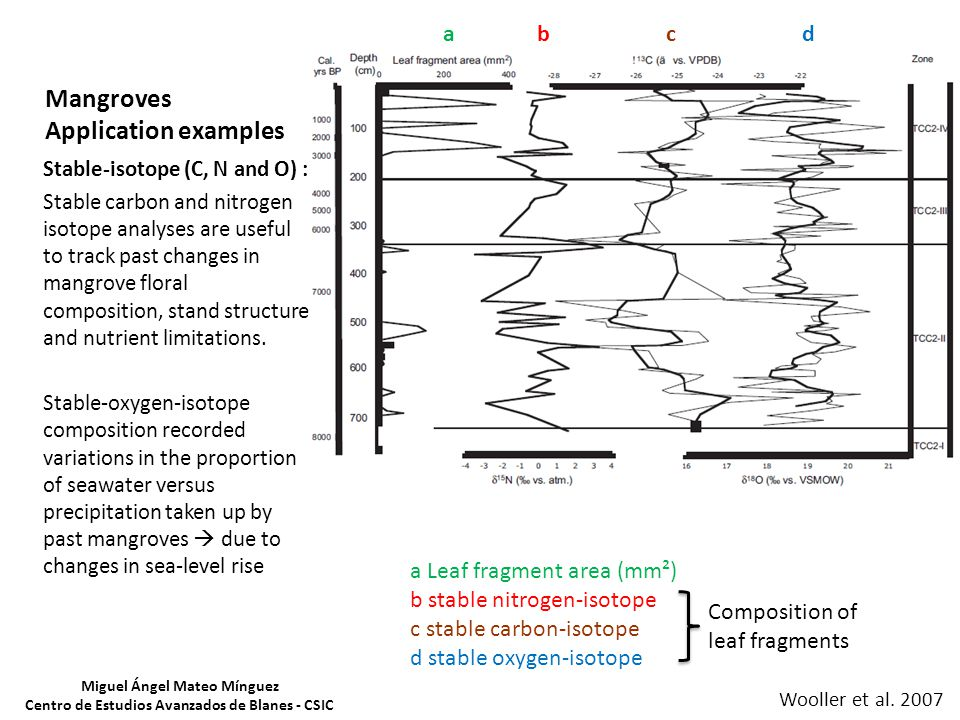 Mangroves Application examples a b c d a Leaf fragment area (mm²) b stable nitrogen-isotope c stable carbon-isotope d stable oxygen-isotope Composition of leaf fragments Stable-isotope (C, N and O) : Stable carbon and nitrogen isotope analyses are useful to track past changes in mangrove floral composition, stand structure and nutrient limitations.