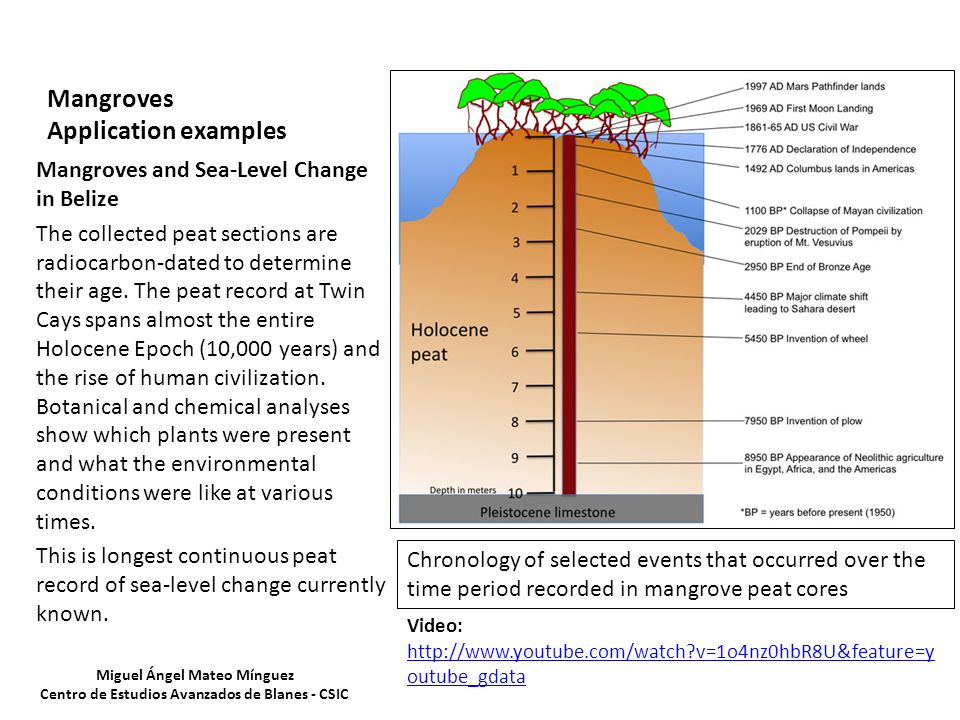 Mangroves Application examples Mangroves and Sea-Level Change in Belize The collected peat sections are radiocarbon-dated to determine their age.
