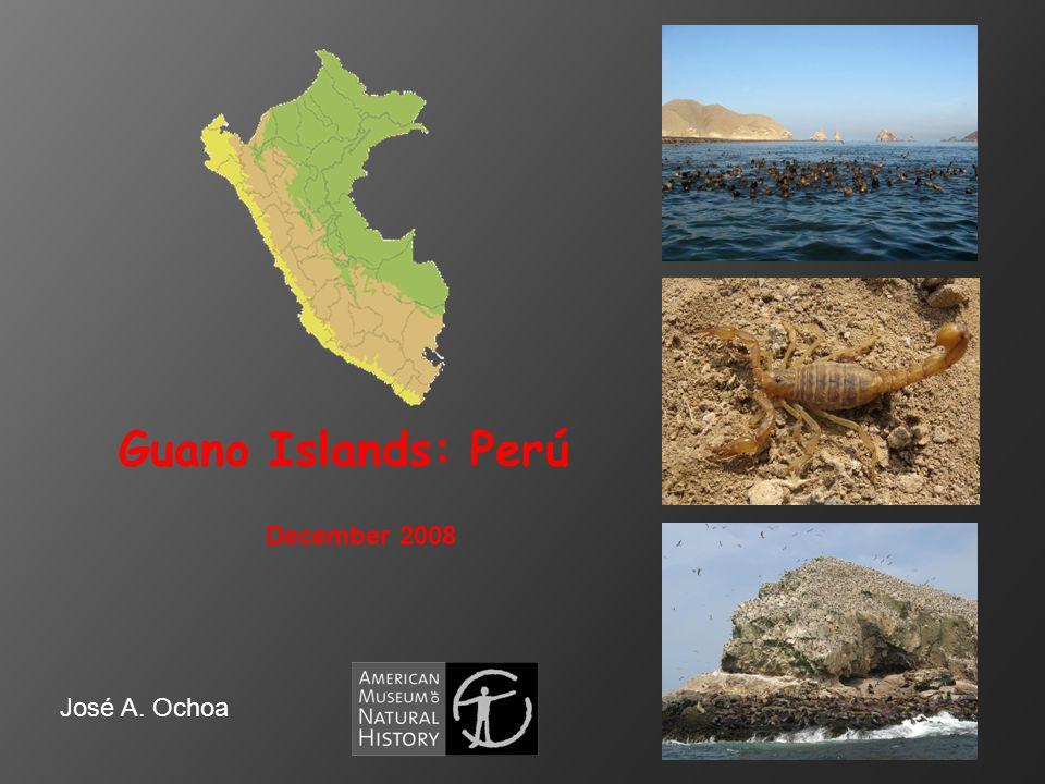 Guano Islands: Perú December 2008 José A. Ochoa