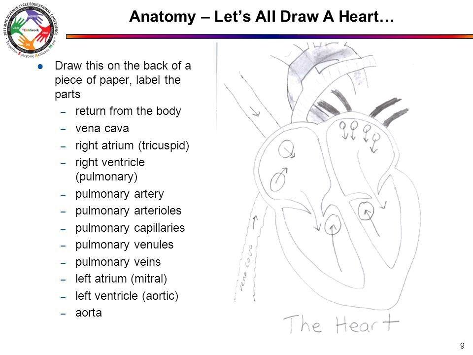 Anatomy – Let's All Draw A Heart… Draw this on the back of a piece of paper, label the parts – return from the body – vena cava – right atrium (tricuspid) – right ventricle (pulmonary) – pulmonary artery – pulmonary arterioles – pulmonary capillaries – pulmonary venules – pulmonary veins – left atrium (mitral) – left ventricle (aortic) – aorta 9