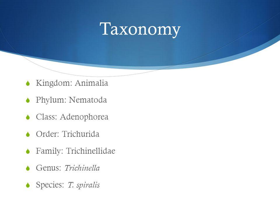 Taxonomy  Kingdom: Animalia  Phylum: Nematoda  Class: Adenophorea  Order: Trichurida  Family: Trichinellidae  Genus: Trichinella  Species: T. s